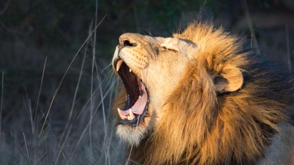 【法语动物世界】一起去非洲草原看看那里的弱肉强食吧~
