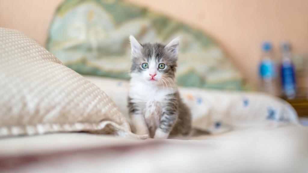 12分钟猫咪法语小百科,快来吸猫吸个够~