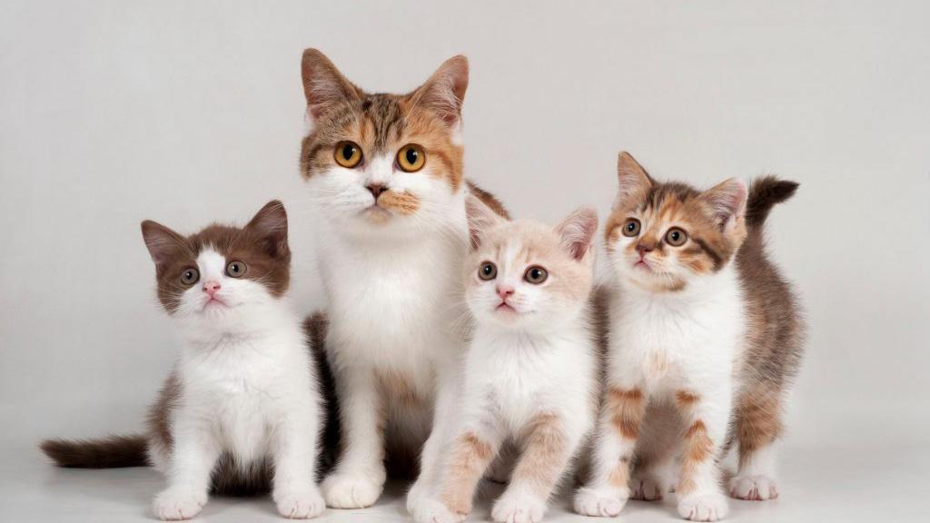 为什么你的猫星人喜欢跟着你?🐱