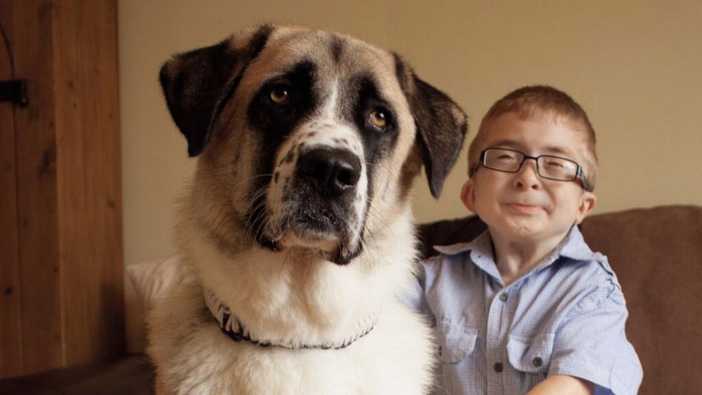 狗狗是人類最忠實的朋友,不論你貧窮還是富有