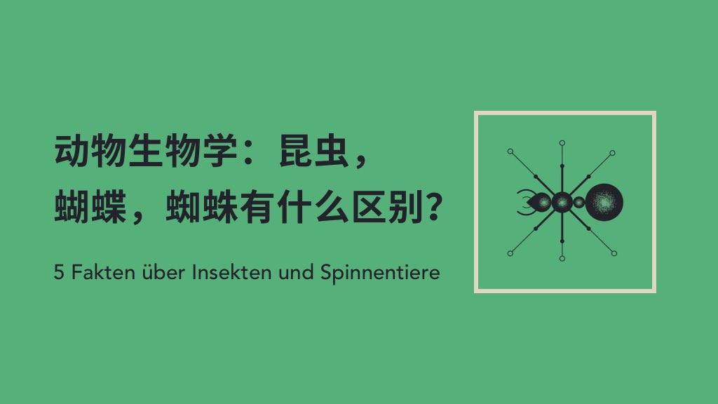 动物生物学:昆虫,蝴蝶,蜘蛛有什么区别?