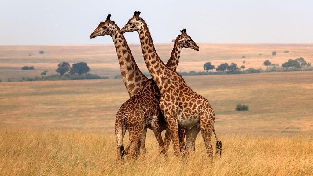 长颈鹿、犀牛…这些森林里的动物如何用西语表达?