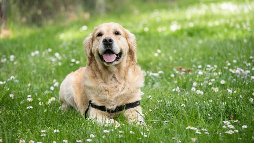 法语动物世界:原来我的狗狗居然可以读懂我的想法