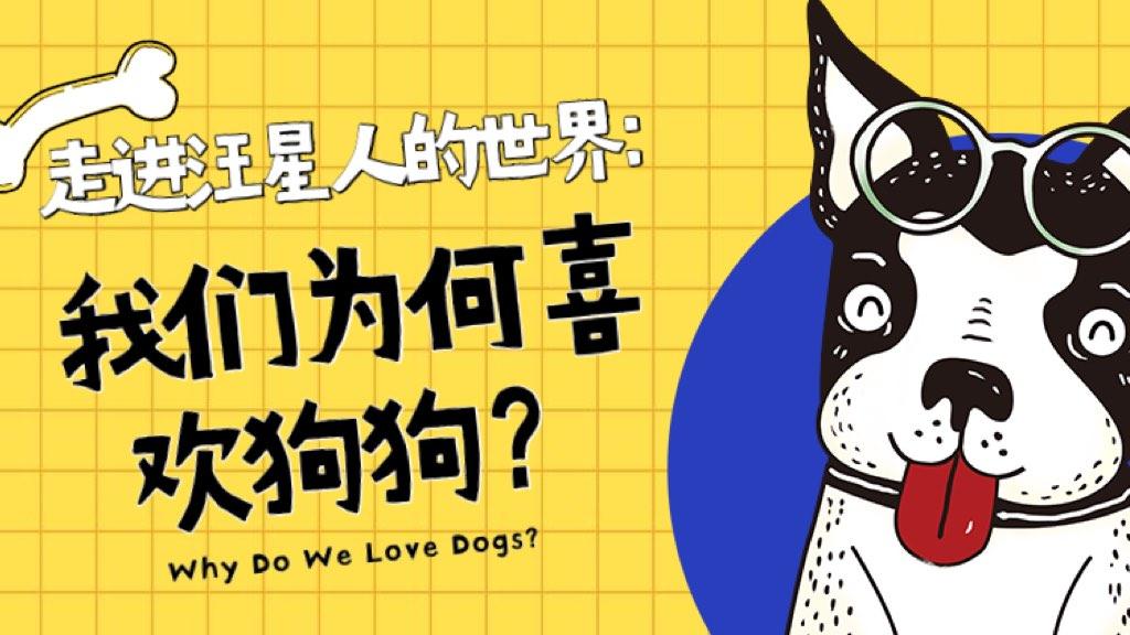 走进汪星人的世界:我们为何喜欢狗狗?
