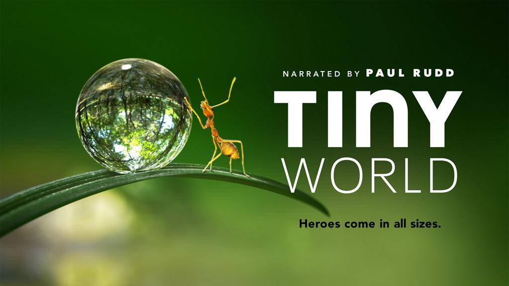 苹果TV《Tiny World》纪录片,看见小小动物眼里的世界