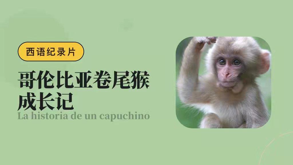 西语纪录片:哥伦比亚卷尾猴的初次探险