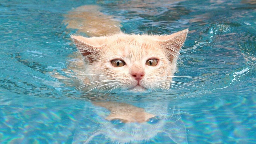 辟谣!猫咪怕水是假象,原因比你想象的更复杂
