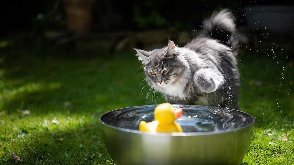 趣味科普:喵星人为什么讨厌水呢?🐈