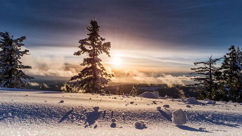 從霜降到大雪,一棵樹是如何渡過冬天的???