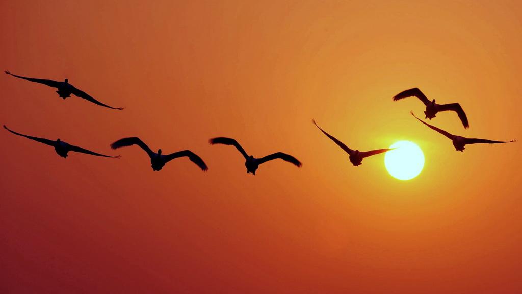 法语每日一问:为什么鸟类要迁徙?